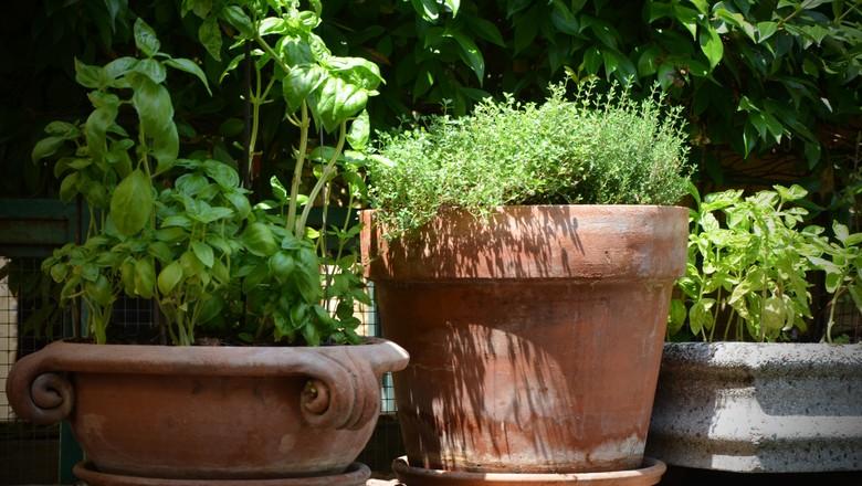 horta-pomar-plantas (Foto: Pxhere/CreativeCommons)