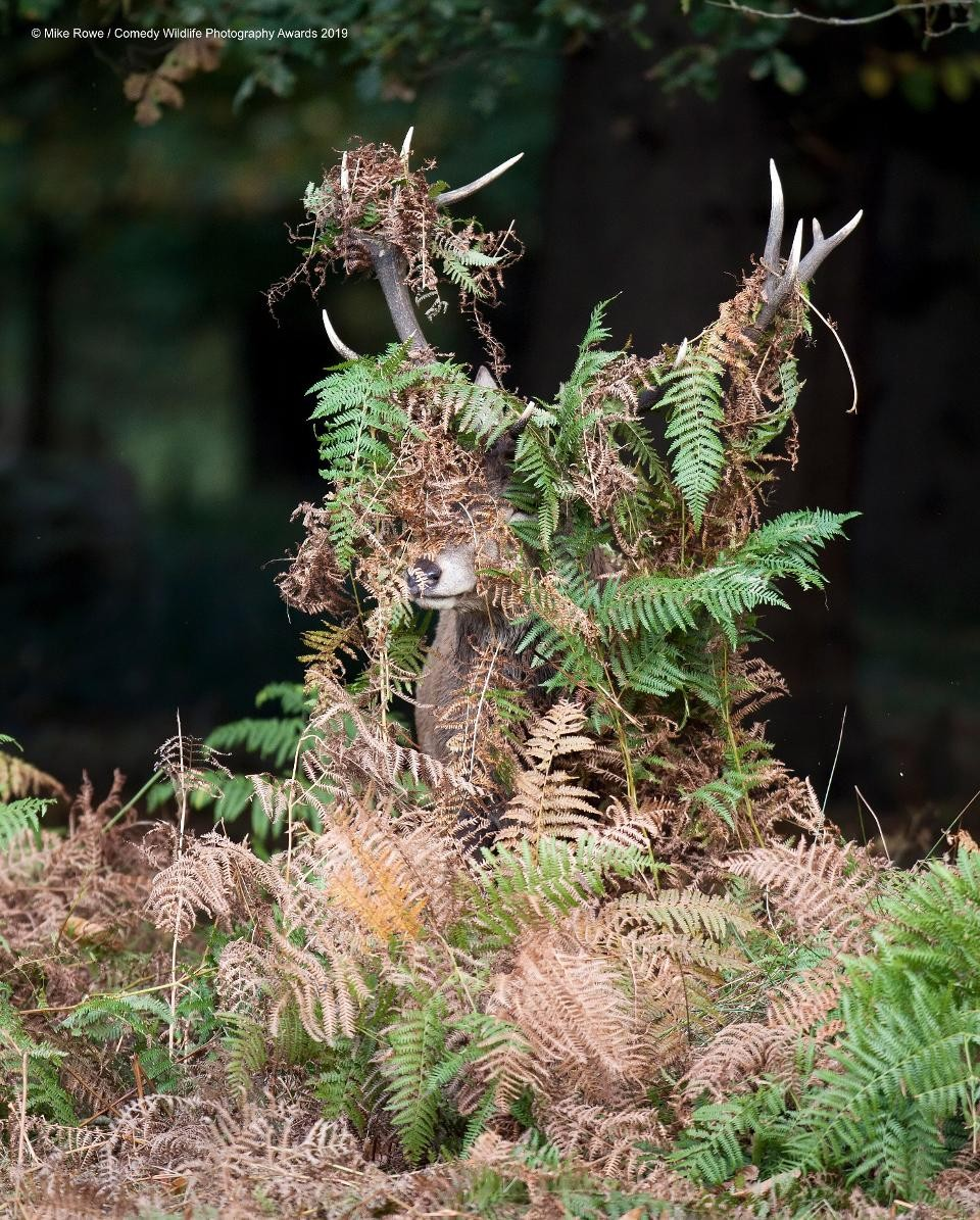 Deer? What deer? (Photo: Reproduction Comedy Wildlife Photography Awards 2019)