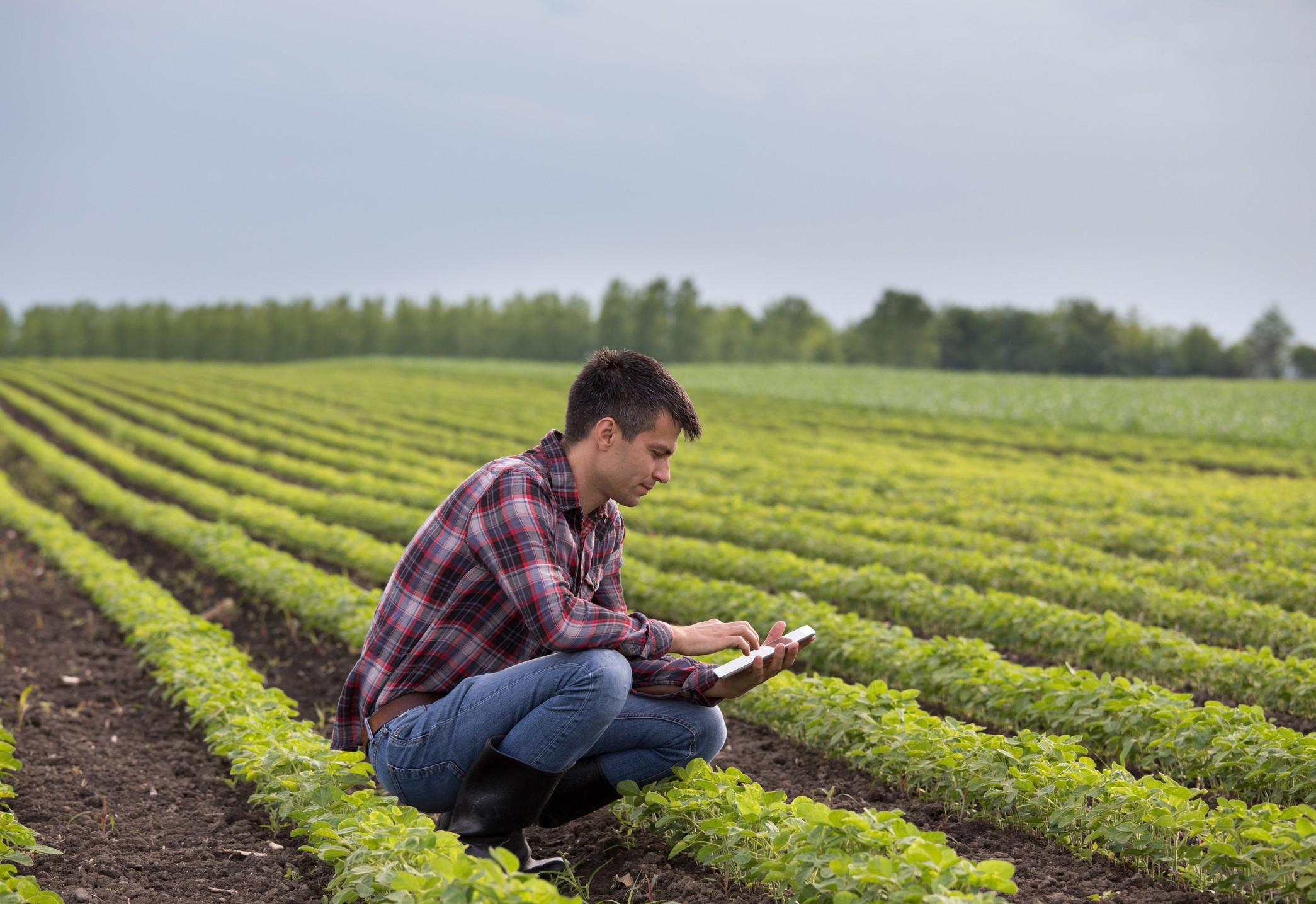 As três formulações da Satis garantem que a soja tenha seu potencial produtivo explorado ao máximo. (Foto: Getty Images)