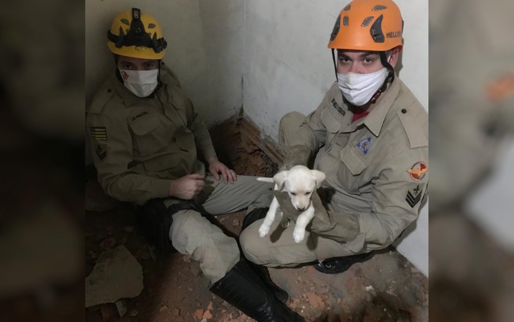 Filhote de cadela é resgatada após ficar presa entre duas paredes, em Cristalina