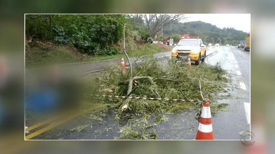 Ventania derruba árvores e causa bloqueios em Porto Alegre e no interior do Rio Grande do Sul