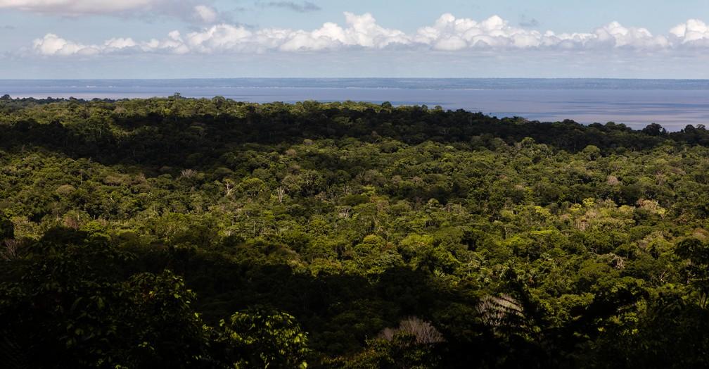 Parte da Floresta Nacional do Tapajós, com o rio Tapajós ao fundo, é vista de mirante na trilha próxima à comunidade Jamaraquá — Foto: Marcelo Brandt/G1