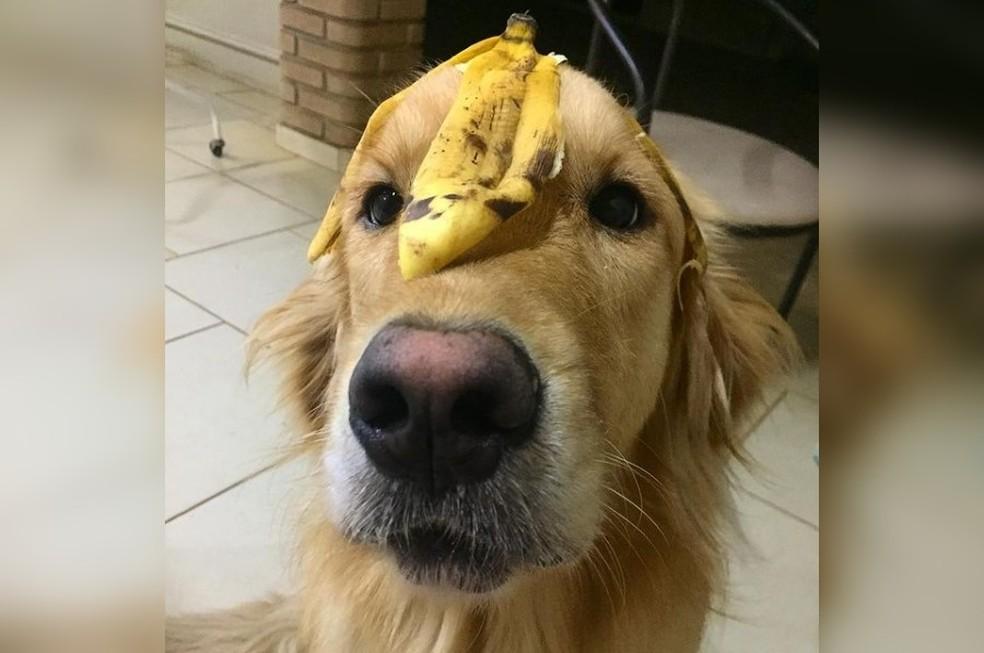 Veterinária dá orientações sobre frutas que podem ser oferecidas aos cães — Foto: Instagram/Reprodução