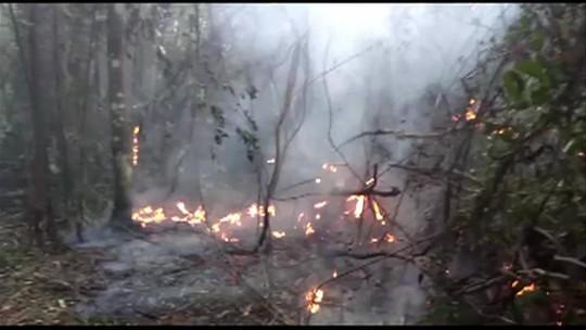 Incêndio em vegetação de Rio das Flores já dura três dias