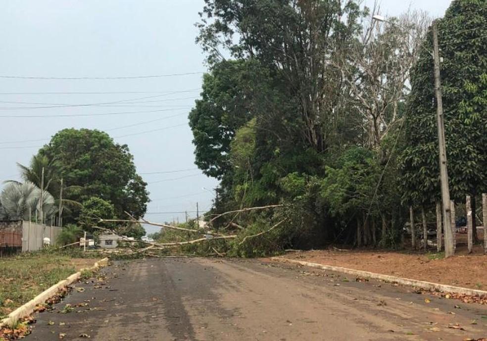 Árvore caiu no meio de rua em Vilhena, RO — Foto: Reprodução/Redes Sociais