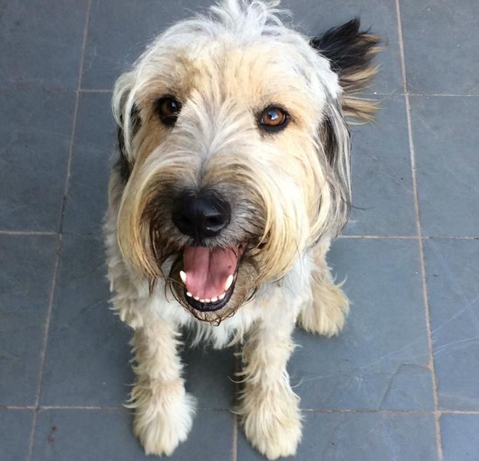 Januário, um dos cães resgatados por Ricardo Fonseca — Foto: Ricardo Fonseca/Arquivo pessoal