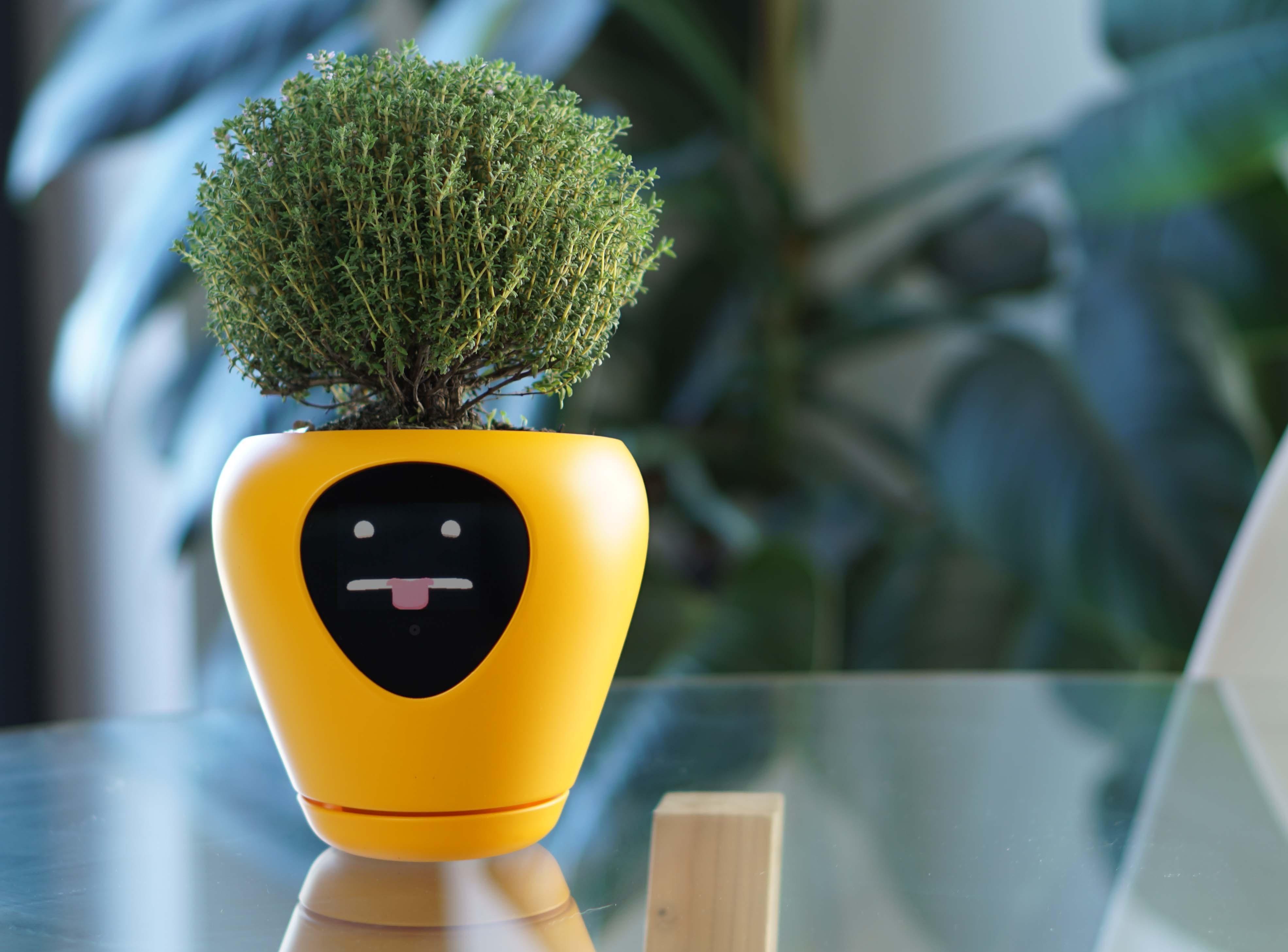 Resultado de imagem para vaso inteligente mostra o que sua planta precisa