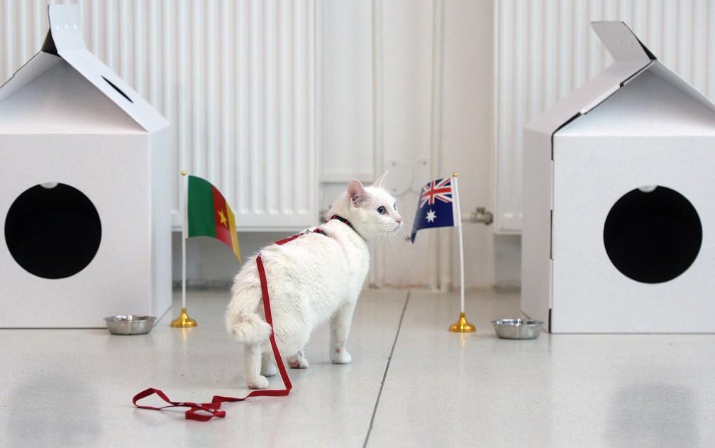 -  O gato Aquiles se aproxima da bandeira da Austrália ao prever resultado de um jogo do Grupo B da Copa das Confederações da FIFA, em foto de 22 de jun