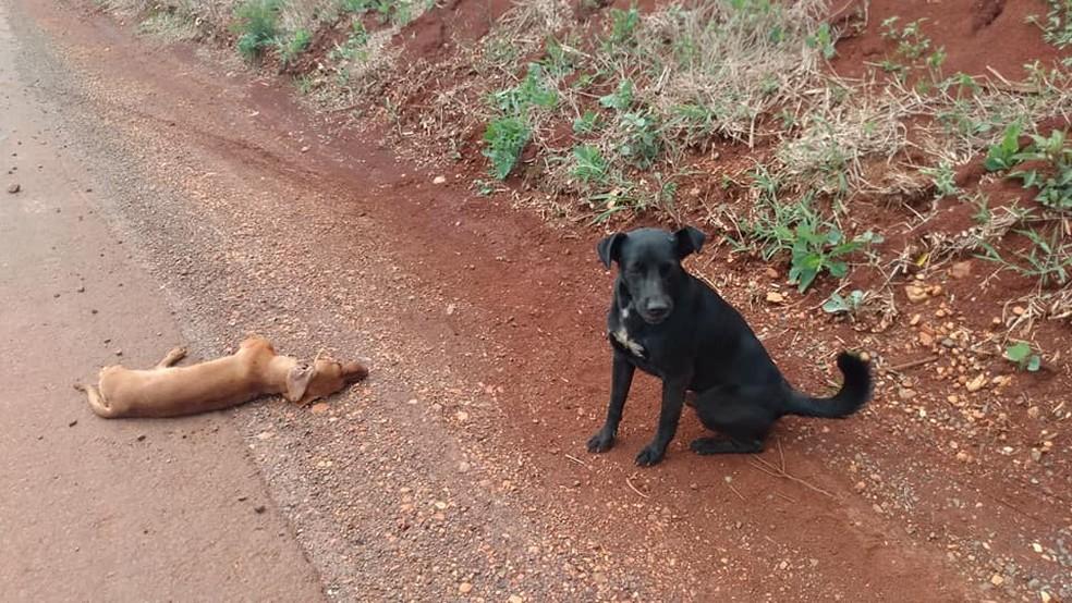 Cão fez 'vigília' ao lado de cachorro morto e chamou atenção de motoristas — Foto: Arquivo Pessoal