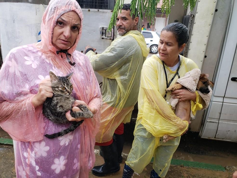 Mais de 20 cães e gatos foram recolhidos após deslizamentos em Guarujá, SP — Foto: Divulgação