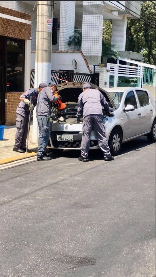 Cobra se esconde dentro de carro e mobiliza bombeiros durante 'resgate' - Notícias - Plantão Diário