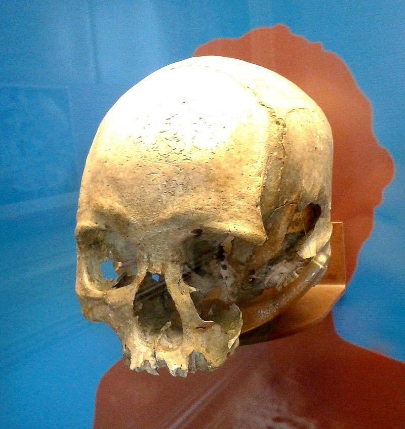 Crânio de Luzia (Foto: Wikimedia Commons)