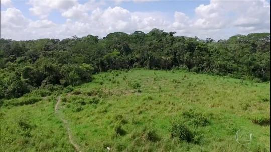 Suspensão do Fundo Amazônia pode prejudicar novas pesquisas agropecuárias no Norte