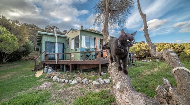 Willow tem uma coleira com geolocalização para nunca se perder do seu dono (Foto: Divulgação)