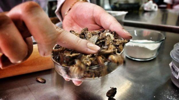 As baratas cinéreas, de origem africana e produzidas em laboratório, são próprias para consumo humano (Foto: Divulgação via BBC News Brasil)