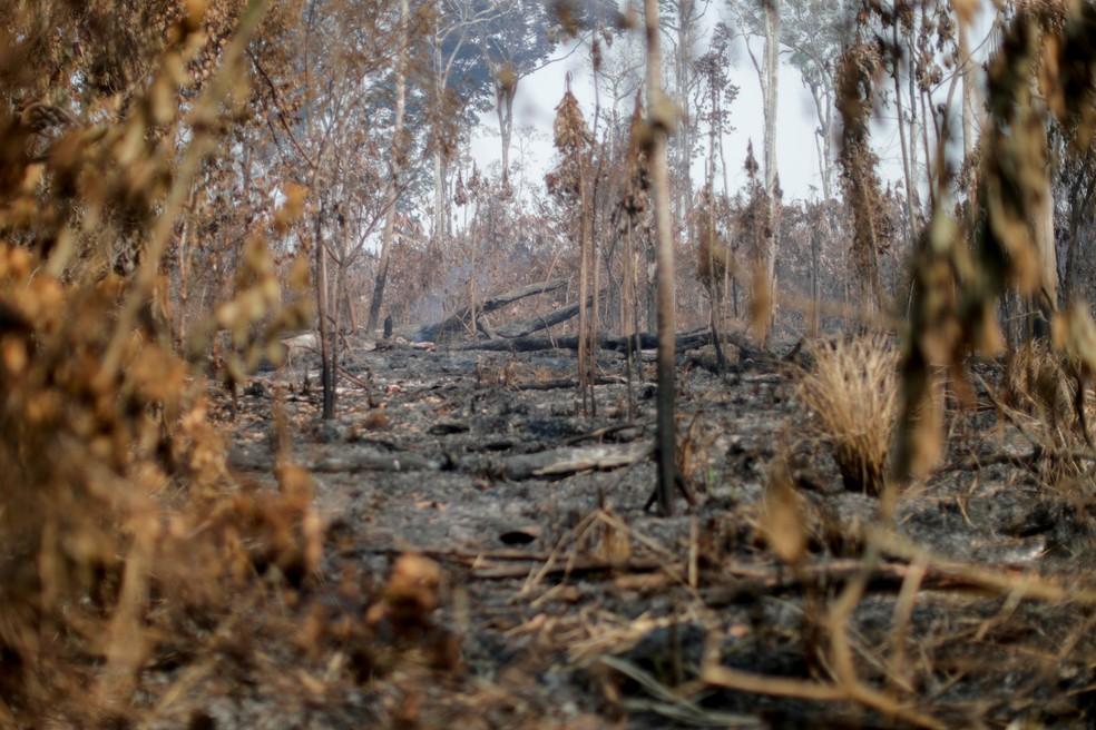 Na foto, trecho queimado da Amazônia é visto próximo a Apuí, no Amazonas, no dia 11 de agosto. — Foto: Ueslei Marcelino/Reuters