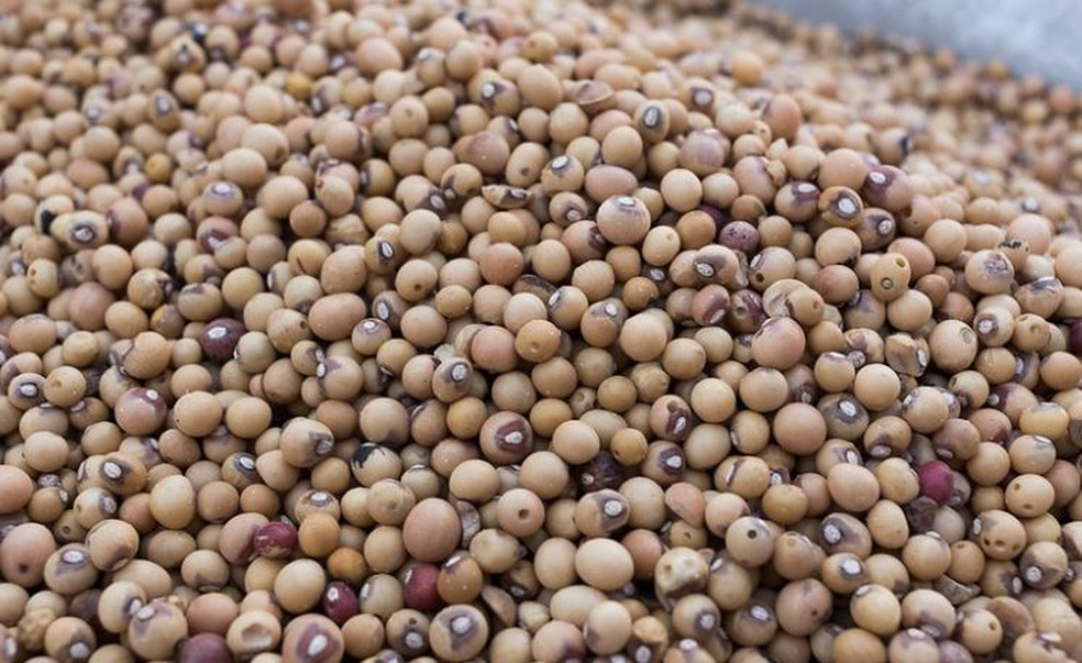 O feijão-bambara chamou a atenção de especialistas em alimentos sustentáveis, porque pode ser cultivado em solos pobres — Foto: Whaun/Visual Hunt