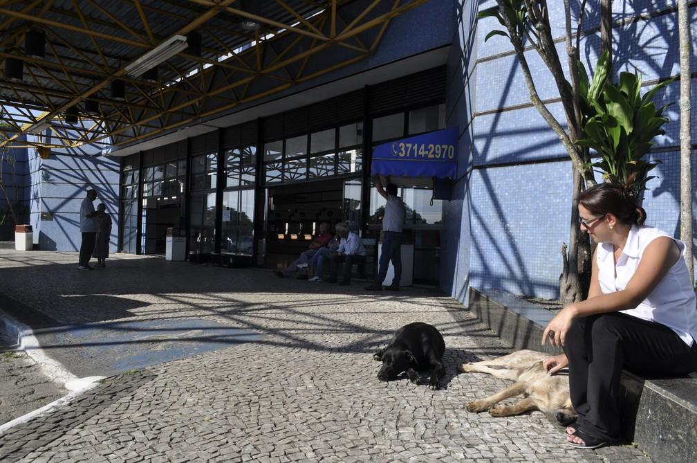 Adoções são acompanhadas pelos taxistas e pelas ONGs — Foto: Camilla Resende/G1