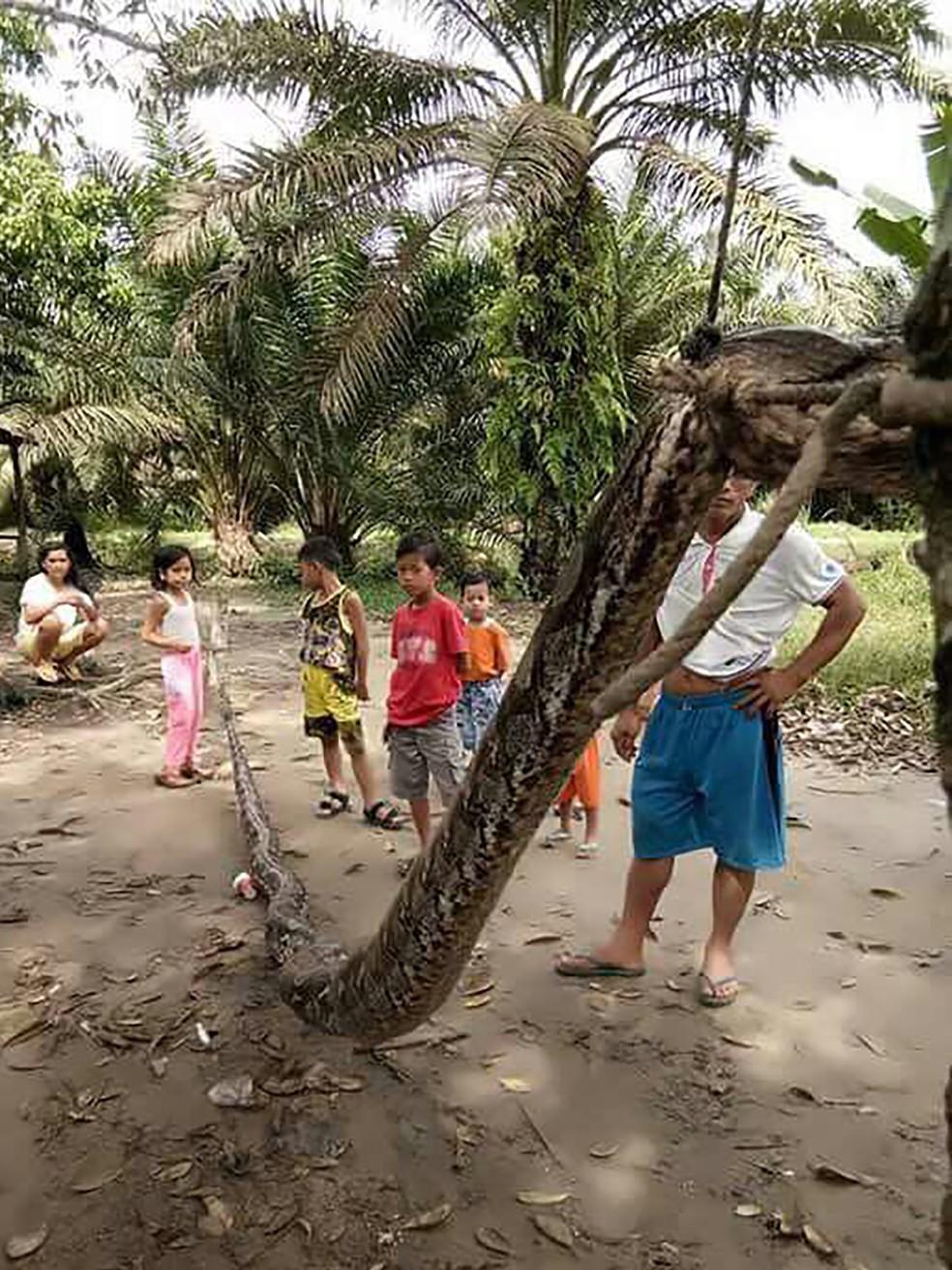 Cobra ficou mostrada por moradores da região (Foto: Batang Gansal Police/AFP)