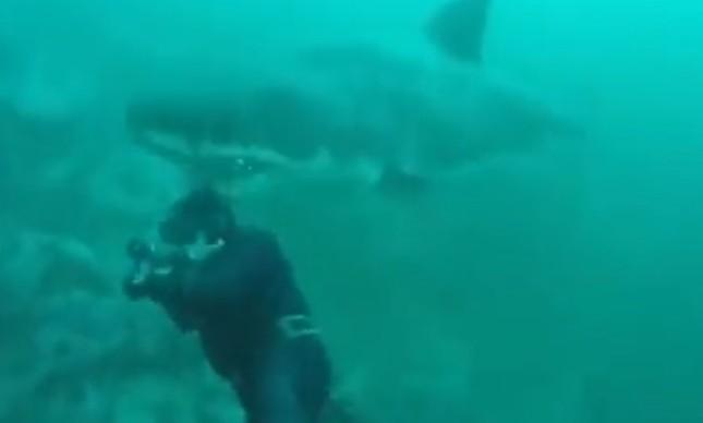 Tubarão surpreende mergulhador por trás
