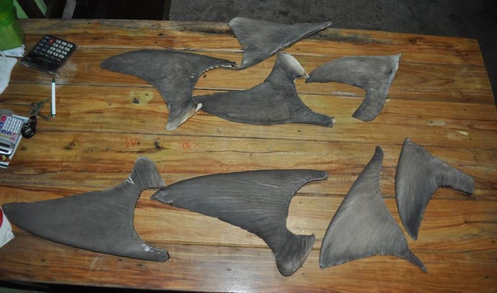Barbatanas dos tubarões são retiradas para comercialização com compradores asiáticos (Foto: Arquivo/Jorge Nunes)