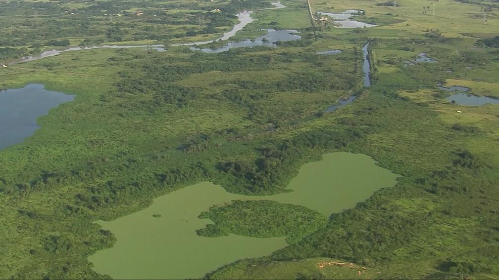 Lago coberto de algas a poucos metros da captação de água do Guandu pela Cedae — Foto: Reprodução/TV Globo