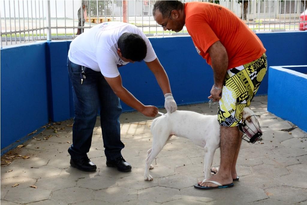 Quase 7 mil animais são imunizados contra raiva em dia de vacinação em Boa Vista - Notícias - Plantão Diário
