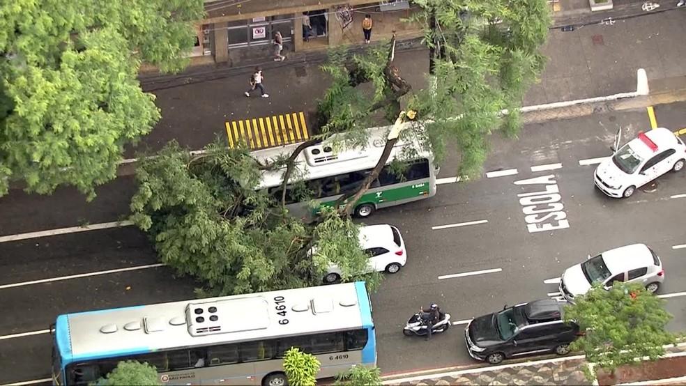 Árvore cai sobre ônibus em SP — Foto: TV Globo/reprodução