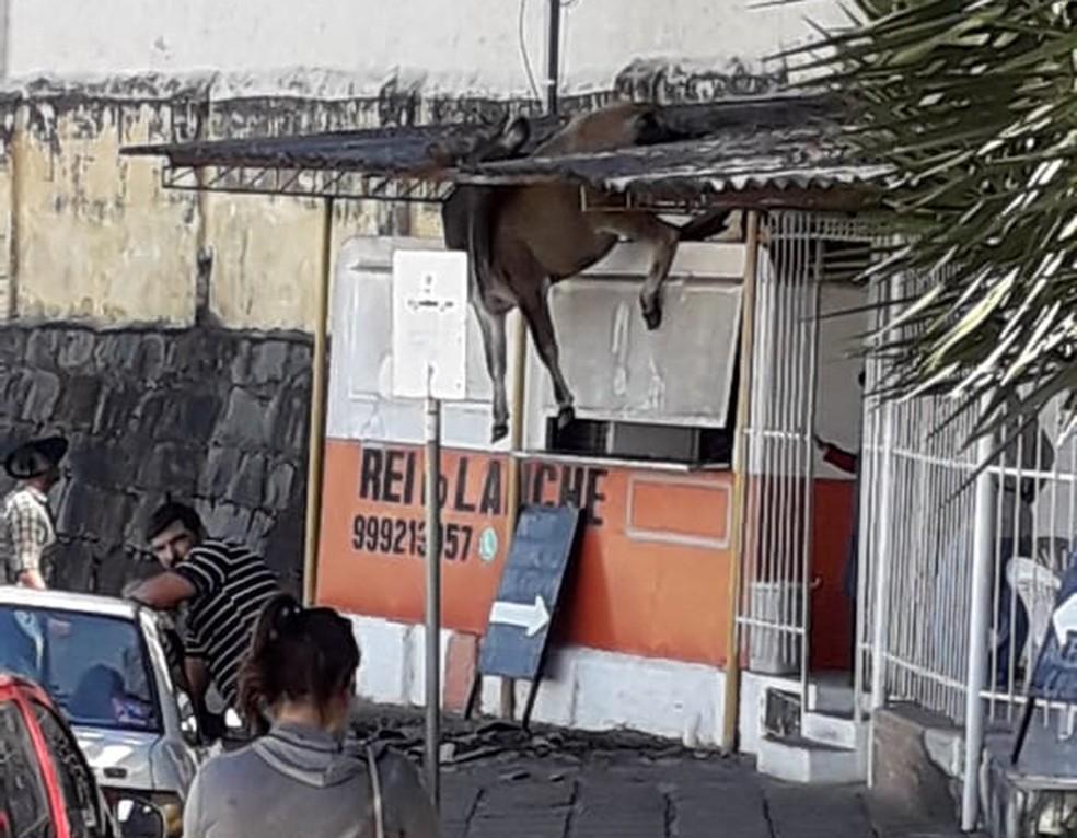 Vaca ficou presa após cair sobre as telhas em Bagé — Foto: Gianni Cuadros/arquivo pessoal