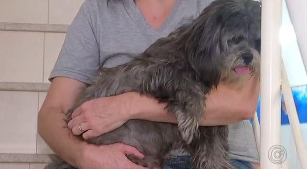 Empresária tem cinco cães e 13 gatos em Araçatuba (SP) — Foto: Reprodução/TV TEM