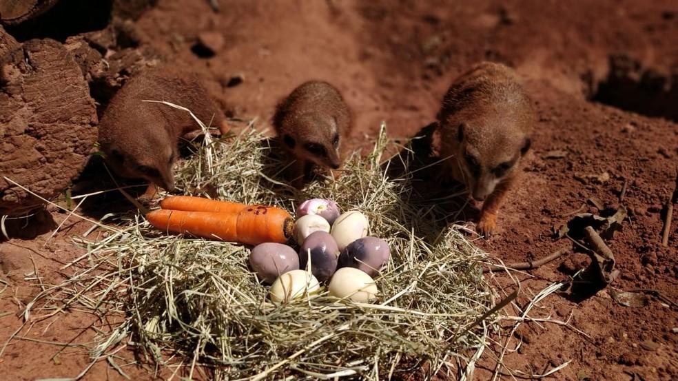 Animais de zoológico de Bauru comemoram a Páscoa com ovos especiais — Foto: Prefeitura de Bauru/Divulgação