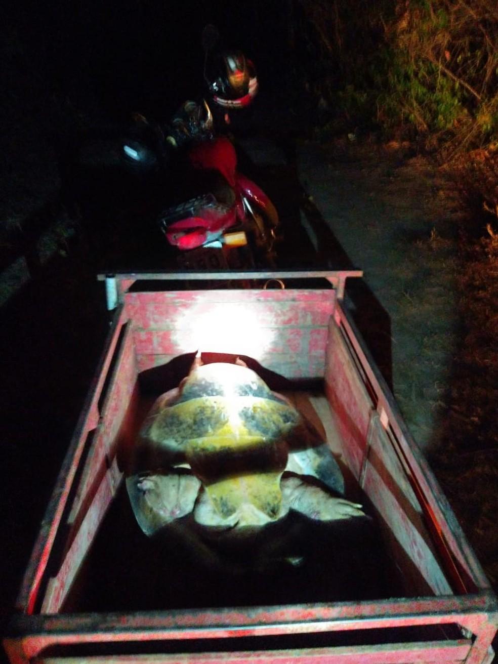 Uma das tartarugas já estava dentro da carretinha da moto — Foto: PM/Divulgação