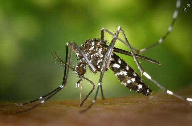 Com mais de 5 mil casos de dengue, AC fica sem inseticida para combate ao mosquito - Notícias - Plantão Diário