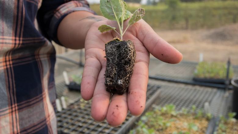 educação, agricultura, pesquisa, ciência, agronomia, planta (Foto: Lucy Knowles/Flickr)
