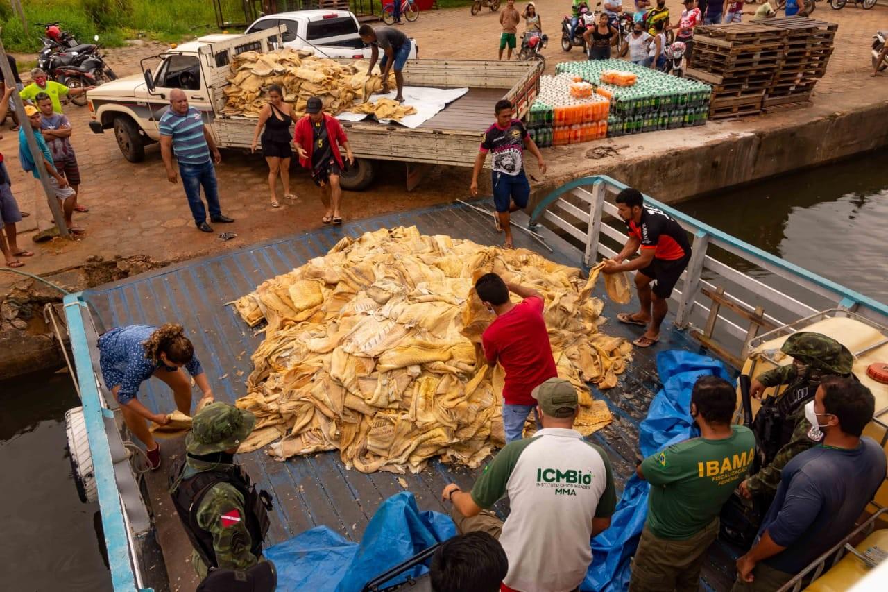Operação 'Águas Claras' apreende 10 toneladas de pirarucu e carnes de jacaré, capivara e tracajá em embarcações, em Prainha