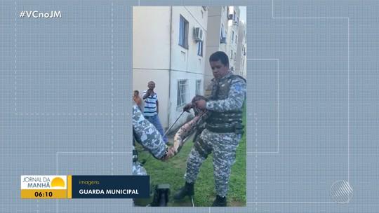 Jiboia de 2,5 metros é capturada em condomínio de Salvador