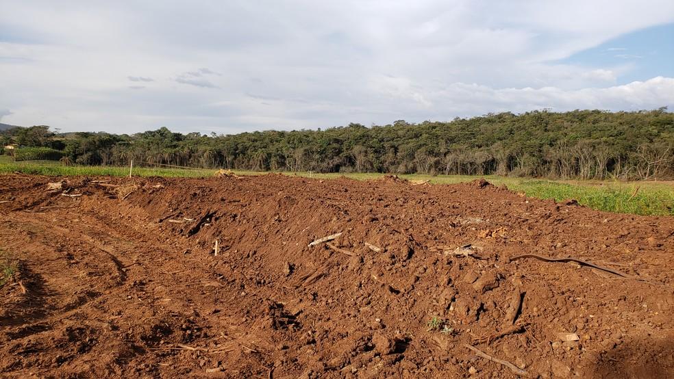 Área onde ficava plantação foi tomada pela lama e hoje está em parte encoberta por mato — Foto: Raquel Freitas/G1