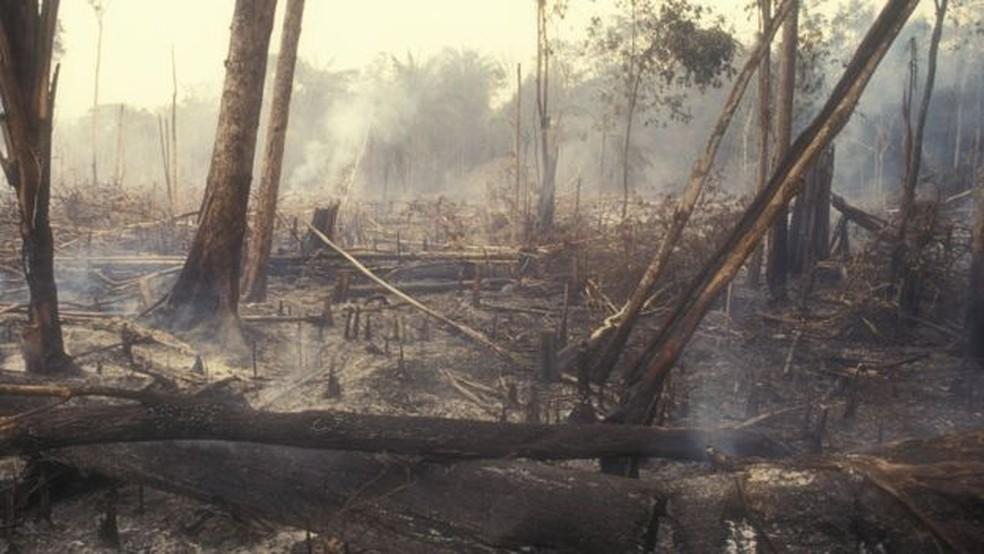 Redução no desmatamento, como este na Amazônia, é uma das medidas urgentes indicadas pelos cientistas — Foto: Getty Images via BBC