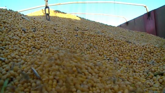 Preço da soja cai 20% em um ano no RS, aponta Emater