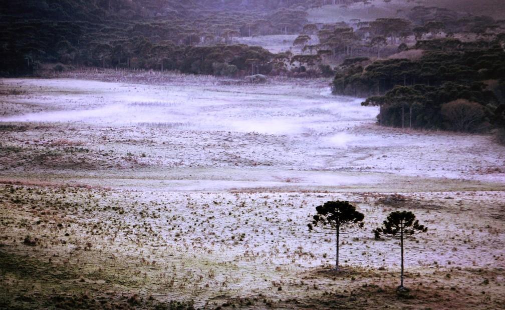 Quarta amanheceu com geada no Vale do Caminhos da Neve, em São Joaquim (Foto: Mycchel Hudsonn Legnaghi/São Joaquim Online)