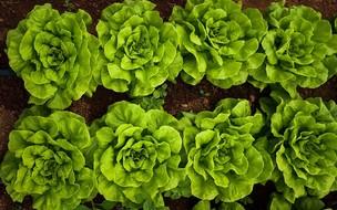7 dicas para você começar a sua horta em casa