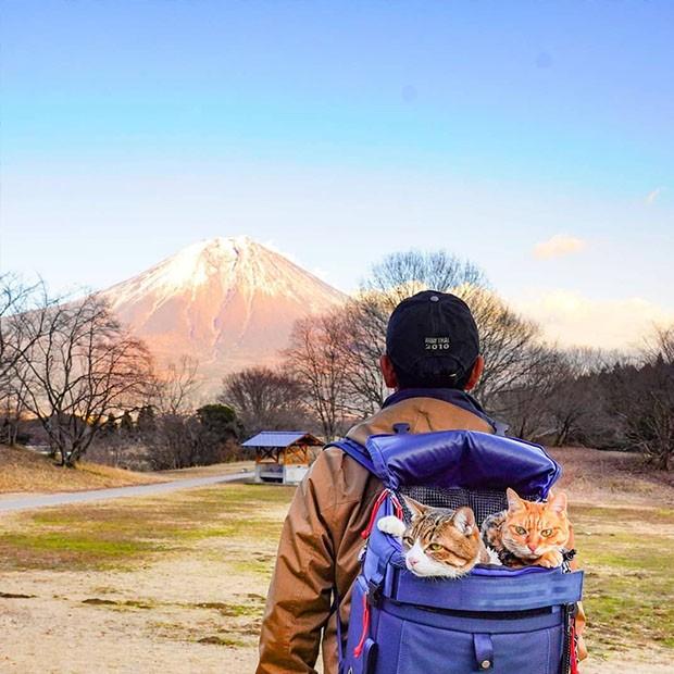 Os dois viajam com seu dono em uma espécie de mochila adaptada. (Foto: Instagram/the.traveling.cats)