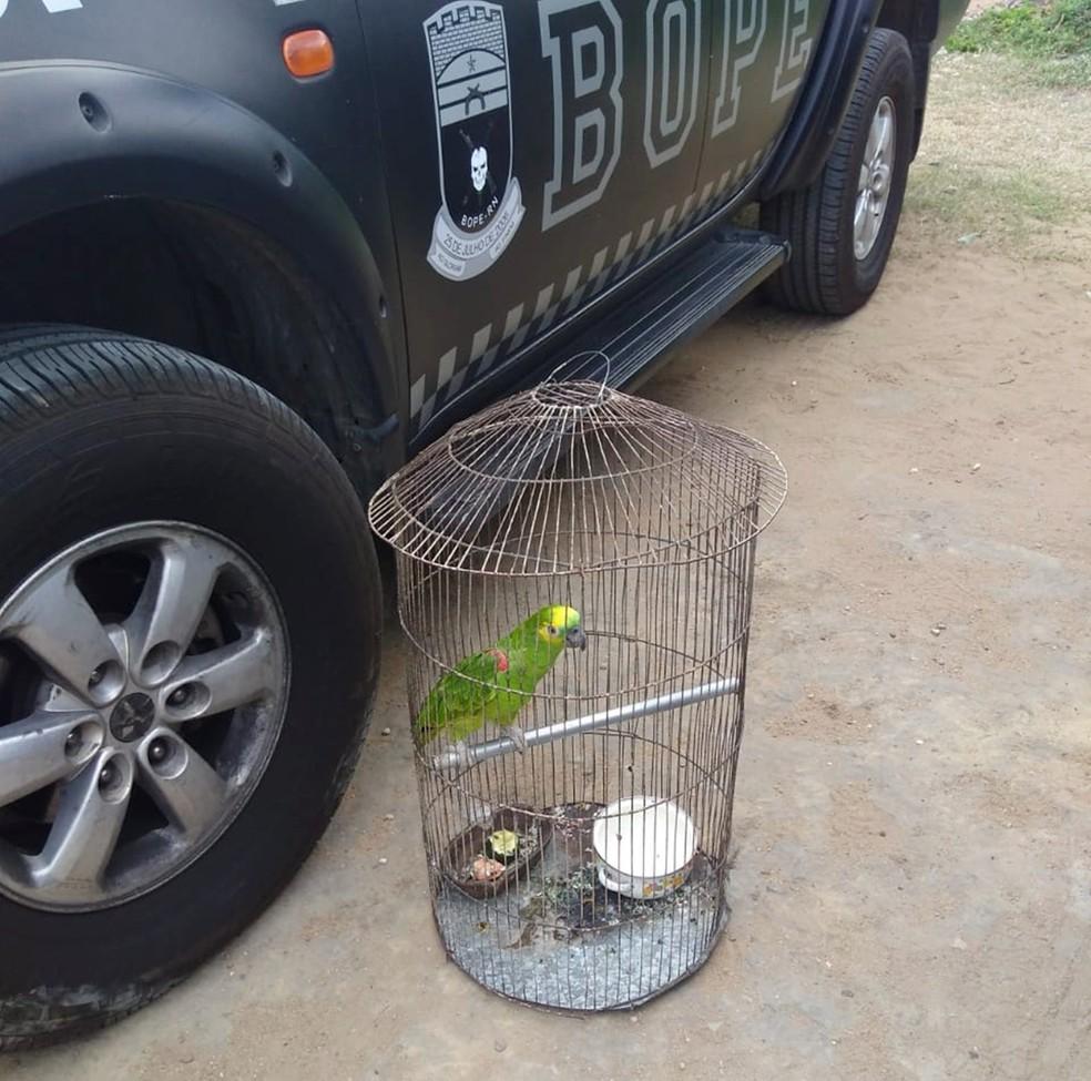 Um papagaio também foi apreendido na casa dos suspeitos — Foto: PM/Divulgação