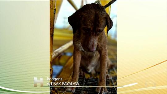 Cachorro é encontrado em alto-mar na Tailândia