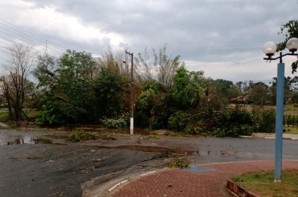 Árvores caíram devido ao vento em Cerquilho, na tarde desta quinta-feira (9) — Foto: Arquivo pessoal