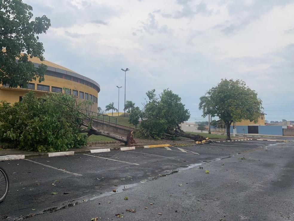 Defesa Civil registrou pelo menos 15 quedas de árvore em Cerquilho — Foto: Arquivo pessoal