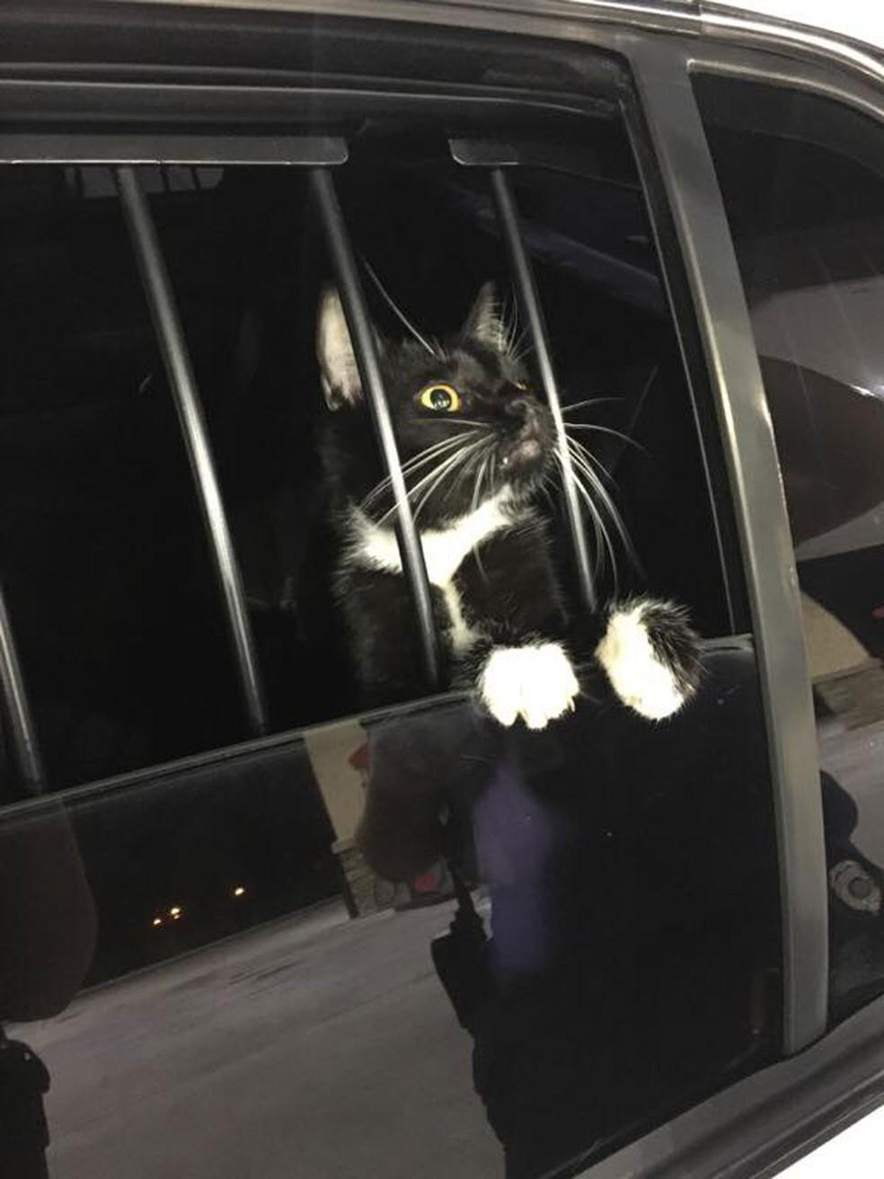 Gato é 'preso' suspeito de furto nos EUA — Foto: Collier County Sheriff's Office/Facebook