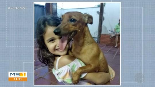 Moradores de Campo Grande procuram cães desaparecidos
