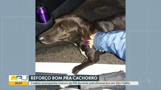 Cadela acompanha viatura da PM durante patrulhamentos em São Fidélis