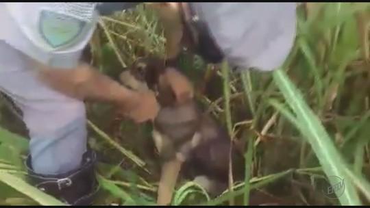 Policiais resgatam filhote amarrado em matagal às margens de rodovia em Itirapuã, SP; vídeo